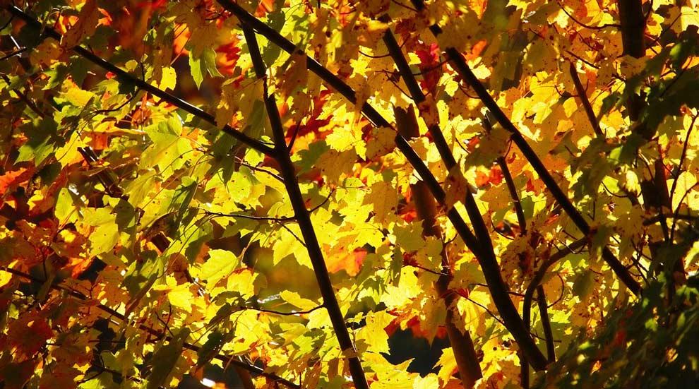 Ville de saint-Eustache - Collectes des feuilles mortes et résidus verts en octobre et novembre