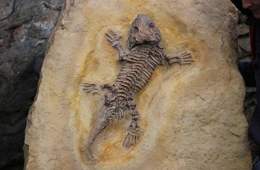 Ville de saint-Eustache - Les fossiles