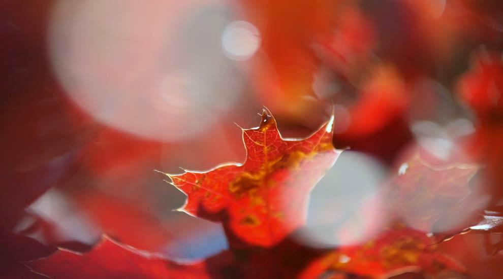 Ville de saint-Eustache - Dernière collecte des feuilles mortes et résidus verts : le 18 novembre 2020