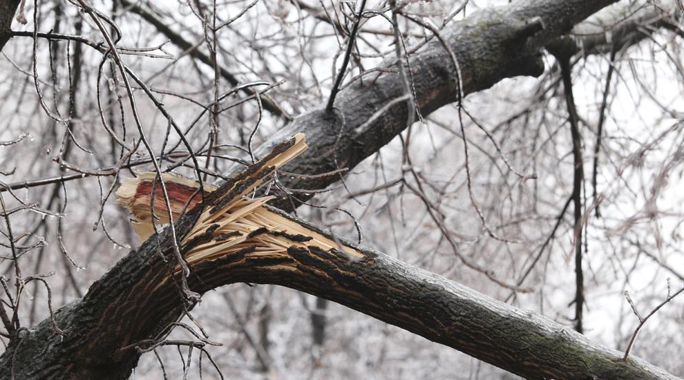Ville de saint-Eustache - Une grande corvée de ramassage de branches à compter du 23 avril