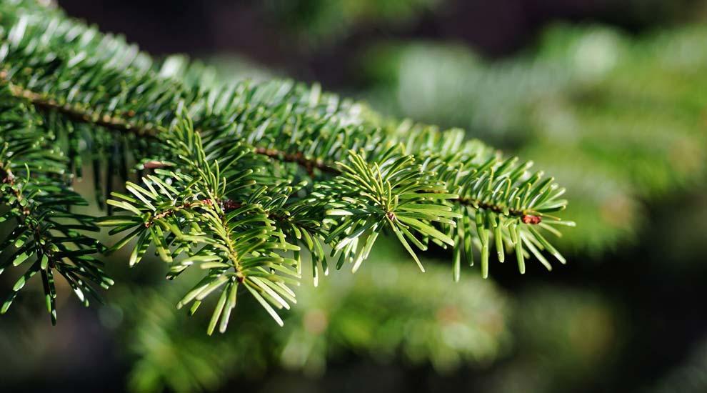 Ville de saint-Eustache - Collecte des sapins naturels et collecte des encombrants en janvier 2019